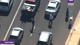 Американська поліція майже годину ганялася за двома ламами