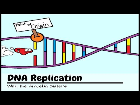 DNA Replication The Cells Extreme Team Sport  YouTube