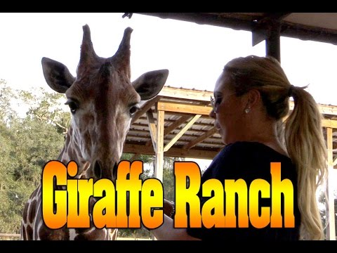 Giraffe Ranch Dade City FL with Mariah Milano