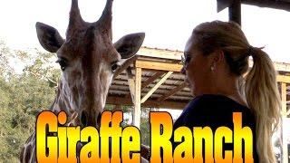 Giraffe Ranch Dade City FL with Mariah Milano
