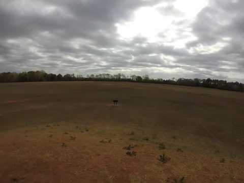 The Kolomoki Run A-Mound