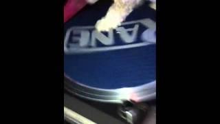 DJ TRIXIE