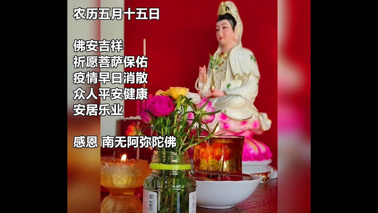 日本玫瑰 九点花 松叶牡丹 供菩萨 感恩菩萨保佑家人、平安、健康、快乐!