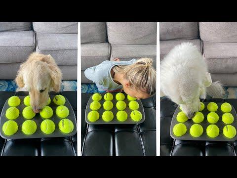 GIRL VS DOGS CHALLENGE! (Super Cooper Sunday #247)
