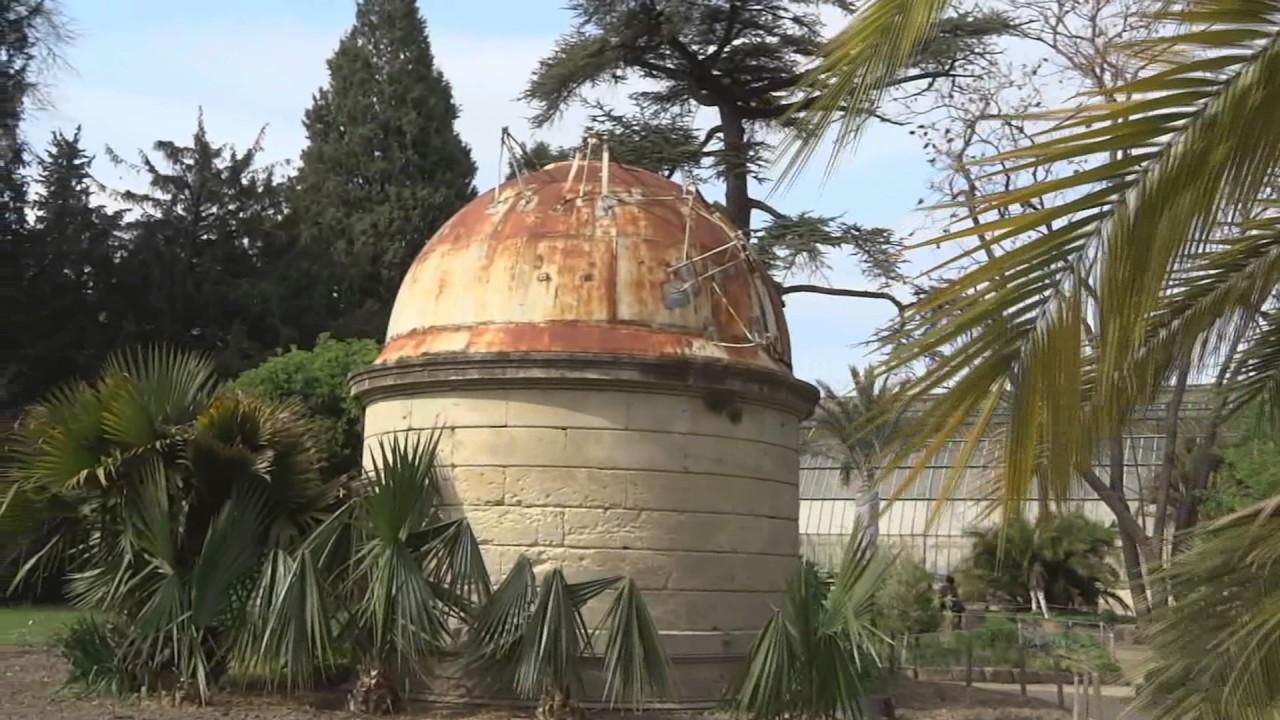 Jardin des plantes botanique de montpellier youtube - Le jardin des plantes montpellier ...