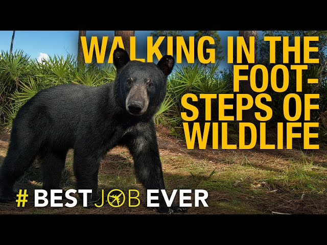 Face-to-Face With Wildlife in Florida's Hidden Wilderness | Best Job Ever