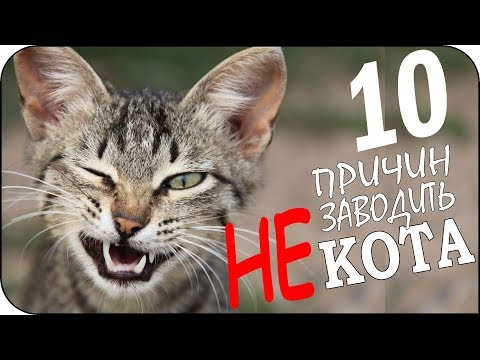 10 причин не заводить кота