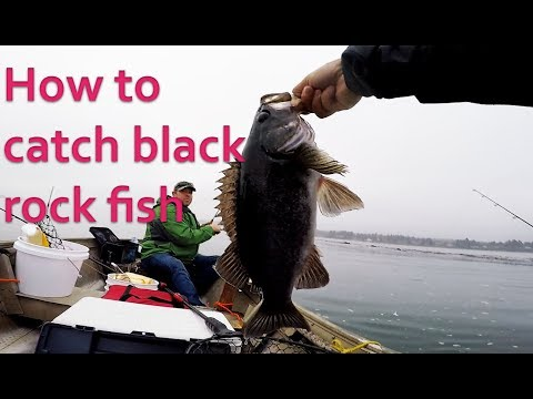 How To Setup A Plastic Bait To Catch Rock Fish