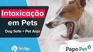 Intoxicação em Pets: Dog Safe + Pet Anjo - Papo Pet por Pet Anjo