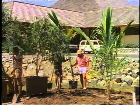 Hamilton Island - mid 1980's - A Dream Come True Pt-I