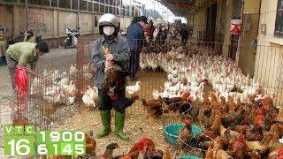 Gà ngoại siêu rẻ đổ bộ, gà Việt điêu đứng | VTC16