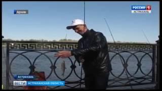 """Астраханский фестиваль """"Вобла"""" в этом году будет проходить по принципу """"поймал -  отпусти"""""""