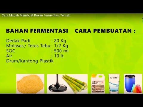 Cara Mudah Membuat Pakan Fermentasi Ternak