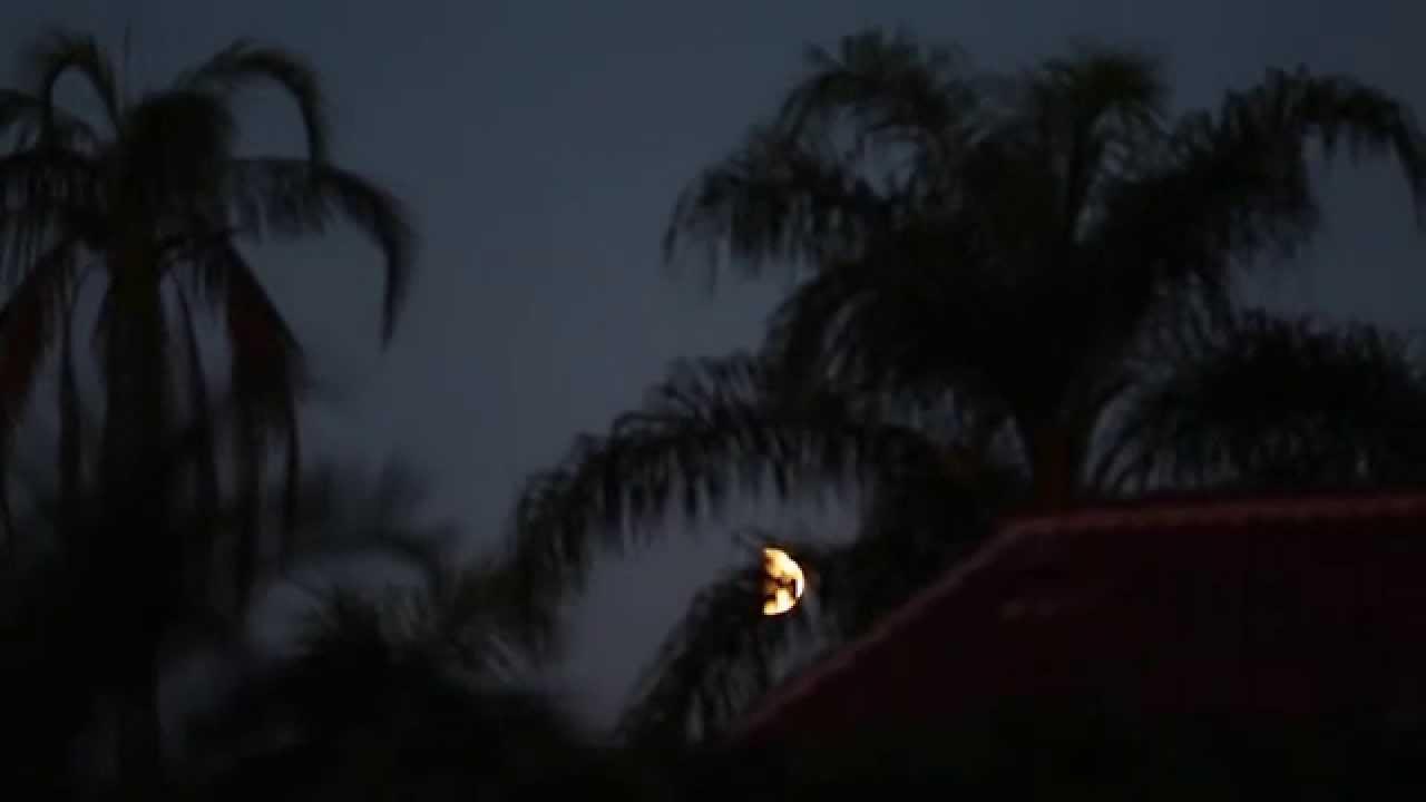 blood moon viewing fl - photo #24