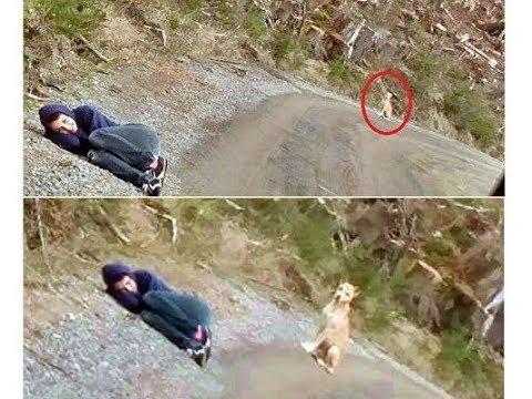 裝死給「不讓人靠近的兇狗看」會發生什麼事?
