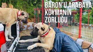 BARON VE REİNAYA YAĞMUR ÇAMUR DEMEDEN SPOR YAPTIRIYORUM