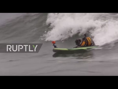 USA: Watch the world's first International Dog Surfing Championship