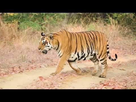 Satpura Wildlife | Madhya Pradesh | MPTourism