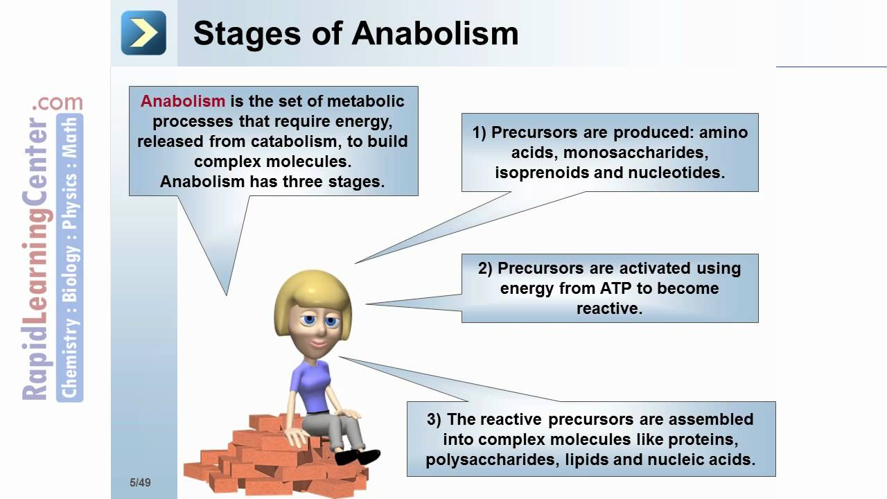 What is metabolism 38