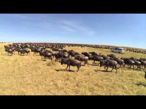 Safari in Kenya, Tanzania, Zanzibar / Africa GoPro 2015 HD