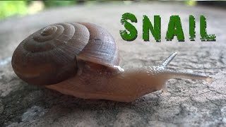 SNAIL move : Animal Video for Kids