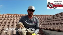 Rats in Tile Roof - Rat Removal Melbourne FL