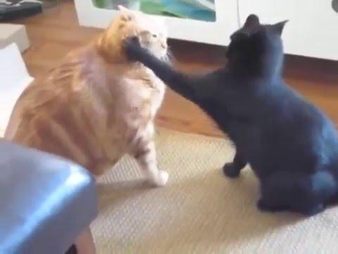 Кот похудел на 10 кг
