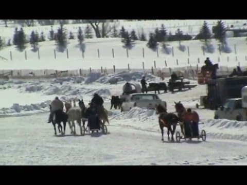 "Chariot ""Cutter"" Races in Jackson Hole, WY"