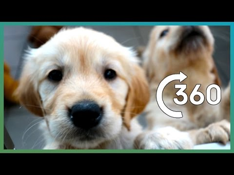 Thumbnail: ADORABLE Puppy Guide Dogs In 360° - Earth Unplugged