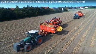 Zwiebeln ernten / roden - Zwiebelernte in Niedersachsen - 2 große GRIMME Kartoffelroder SE 150-60