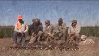 Mexico Pheasant Hunting in Mexicali Valley