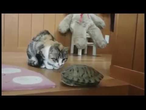 Прикол с животными