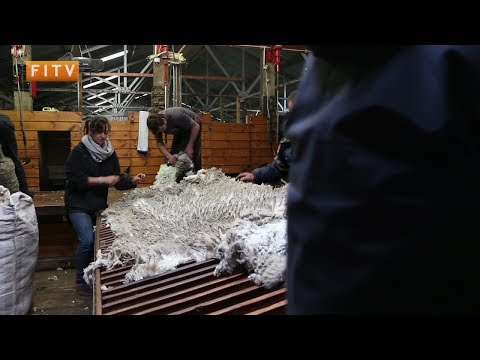 Falklands' Wool: Where Next For the Industry?