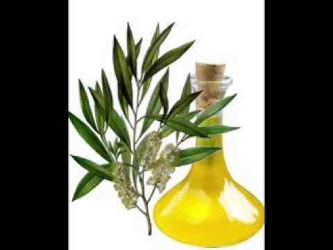 cajeput-oil-benefits