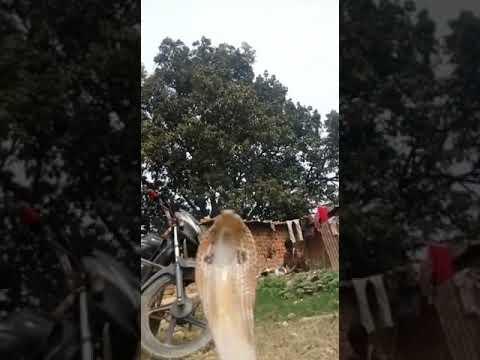 Dheeraj baba snake master in ghazipur
