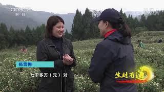 《生财有道》 20191213 生态中国乡村行:蜜甜花果香 特产看云阳| CCTV财经