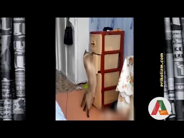 VIDEO ENGRAÇADO - GATOS 2