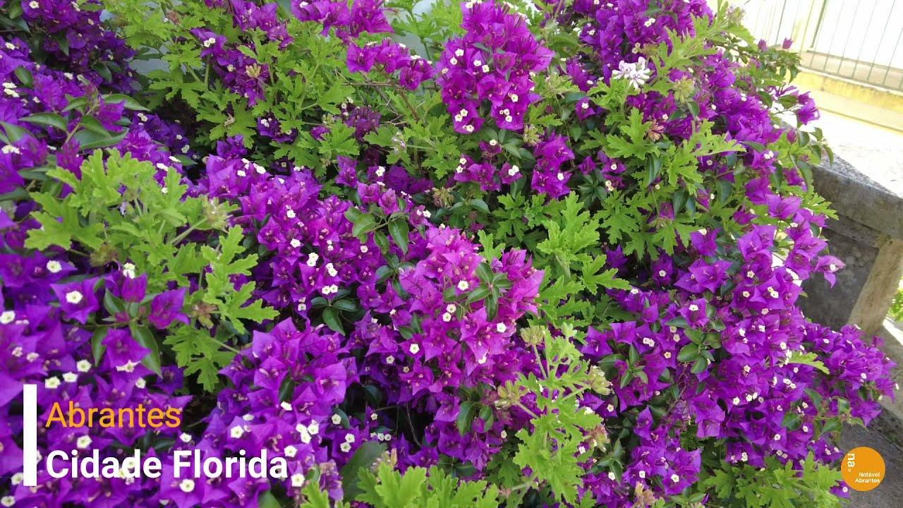 #patrocinado | Abrantes Cidade Florida