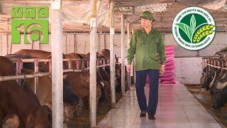 Ngắm trang trại nuôi bò lớn nhất Ninh Bình   VTC16