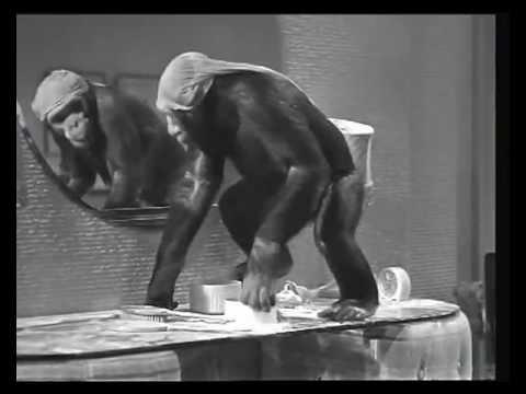 divertidas monadas de chita mono de tarzan