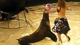 Presentation of the circus with the participation of marine animals.