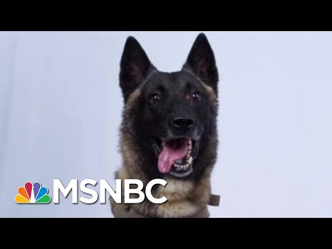 President Donald Trump And The Very Good K-9...Or Dog, As He Calls It   All In   MSNBC