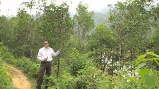 Frontier Co-op Organic Star Anise Sourcing in Vietnam