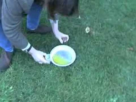 Collecting a Urine Specimen from your Female Dog - YouTube