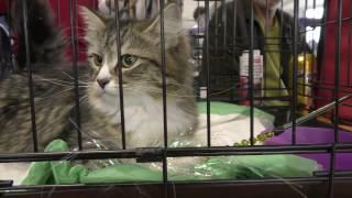 выставка кошек 2017 часть 1