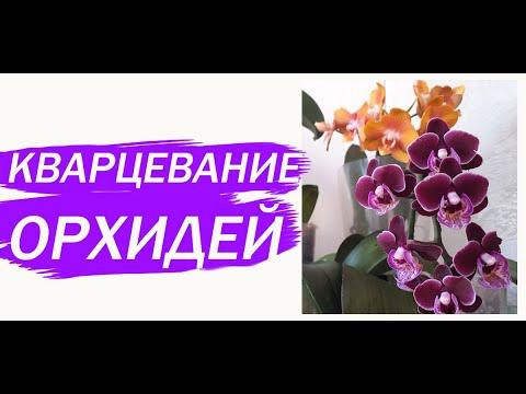 Кварцую орхидеи. Эксперимент или авантюра!?