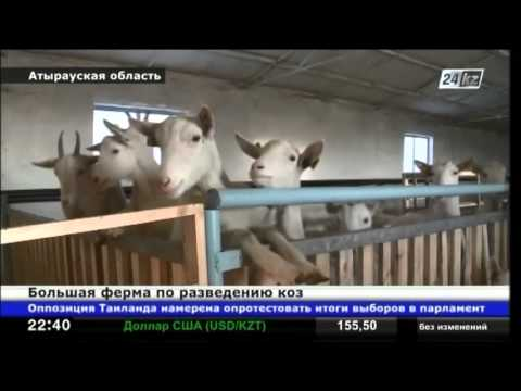 В Атырауской области построили большую ферму по разведению коз
