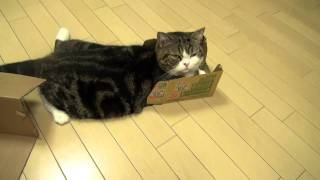 いろいろな箱とねこ2。-Many boxes and Maru2.- thumbnail