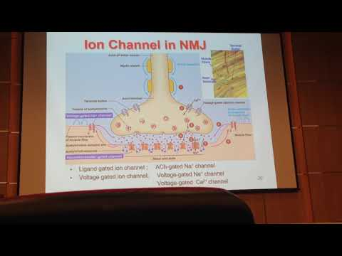 Ion channel in NMJ -MD022