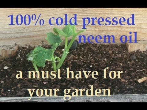 organic pest control for your vegetable garden - 100% Cold Pressed Neem Oil